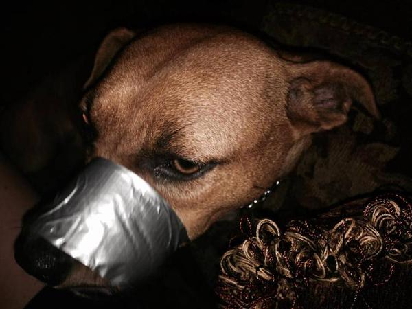 dog with duct tape on facebook
