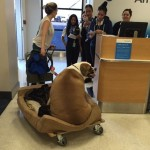 Big Mastiff Flying First Class Is Seizure-Detection Dog for Rescue Founder