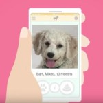 Amy Poehler's New 'Heavy Petting' Web Series Helps Dogs Get Adopted