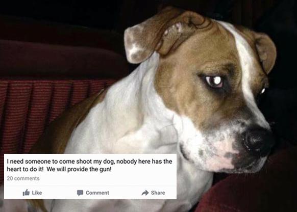 shoot my dog facebook post