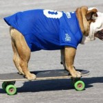 R.I.P. Tillman, the Famous Skateboarding Dog