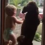 Little Boy and Dog Both Extremely Excited to See Dad [Video]