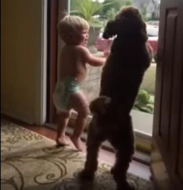 boy and dog happy to see dad