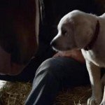 Buh-Bye, Cute Puppy in Budweiser's Super Bowl Ad Who Didn't Sell Beer