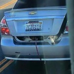 In California, It's Legal to Drive with Your Dogs in the Trunk