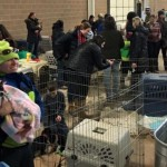 After Truck Crash, Colorado Volunteers Help 100 Stranded Rescue Dogs