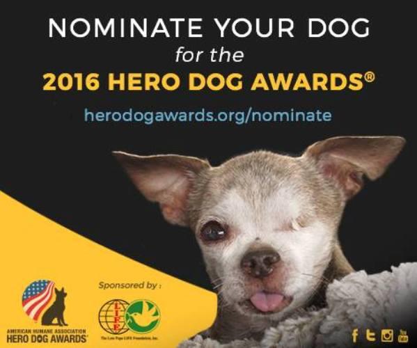 2016 aha hero dog awards