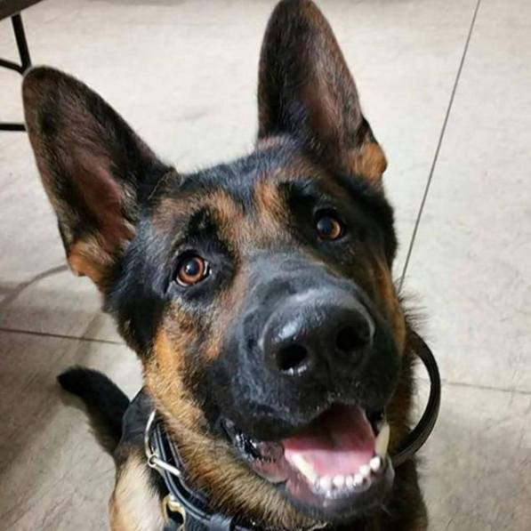 Jethro k9 officer dies after shootout