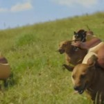 These 3 Super Bowl 50 Commercials Are Doggone Good