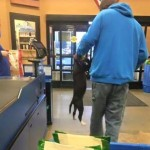 PetSmart Employees Apparently OK with Customer Carrying Dog by Collar