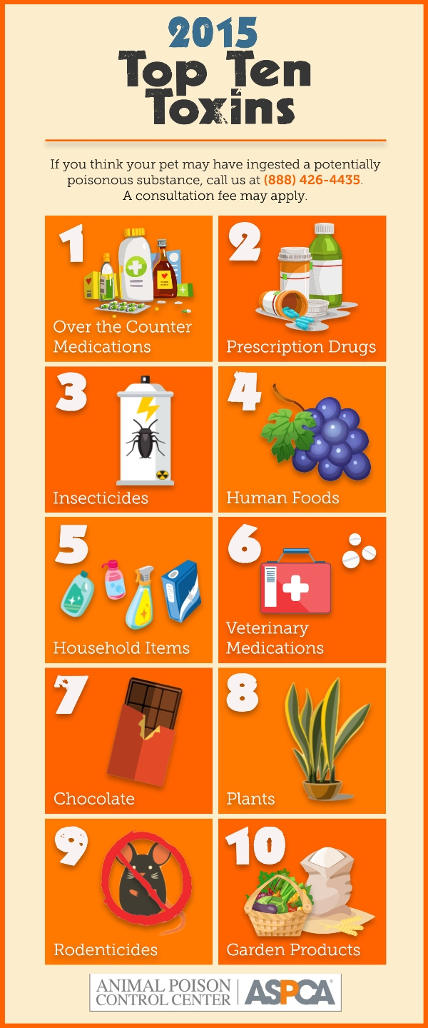 ASPCA top pet toxins infographic