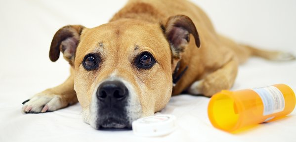 ASPCA top 10 pet toxins 2015