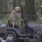 This 'Gardener Retriever' Is Ready to Drive a Lawn Mower