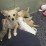 Tissue (Box) Alert! Watch a Shelter Mama Dog Reunite with Her Puppies