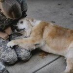 Tissue Alert! Watch a Senior Golden Retriever Reunite with Her Soldier Dog Mom