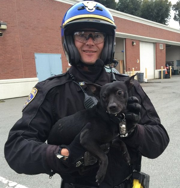 chp officer with chihuahua after chase on bridge