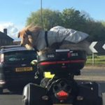 Strapping a Dog to a Motorbike Is Not a Safe Idea