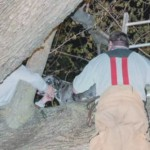 Watch Rescuers Save Great Dane Stuck in Tree