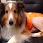 Paralyzed Dog 'Cured' by Vet Intern Moments Before Euthanization