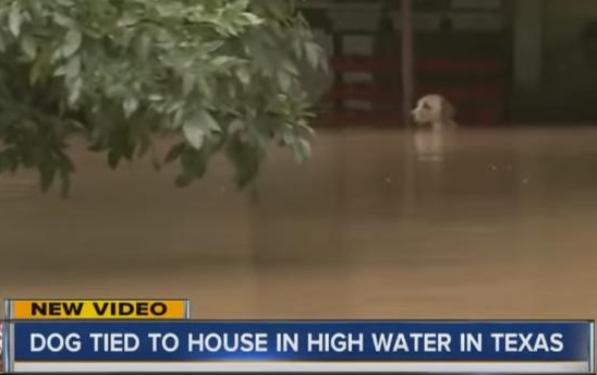 dog chained to porch in Texas flood rescued