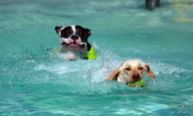 hot weather tips to keep dogs safe