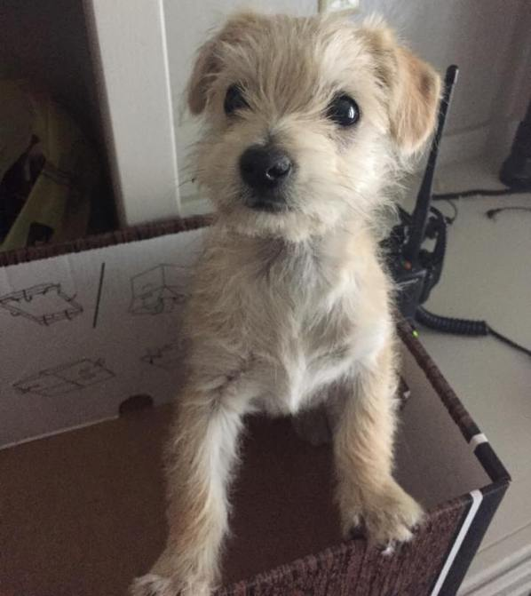 dumped puppy rescued by UPS driver