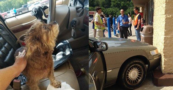 dogs crash car into walmart