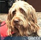 Gander 2016 Hero Dog Awards finalist