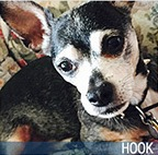 Hook 2016 Hero Dog Awards finalist