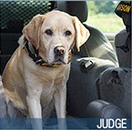 judge-2016-hero-dog-award-finalist