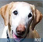 Roo 2016 Hero Dog Awards finalist