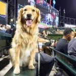 1,122 Four-Legged White Sox Fans Break Guinness World Record