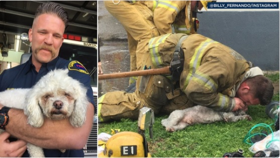 firefighter saves unresponsive dog