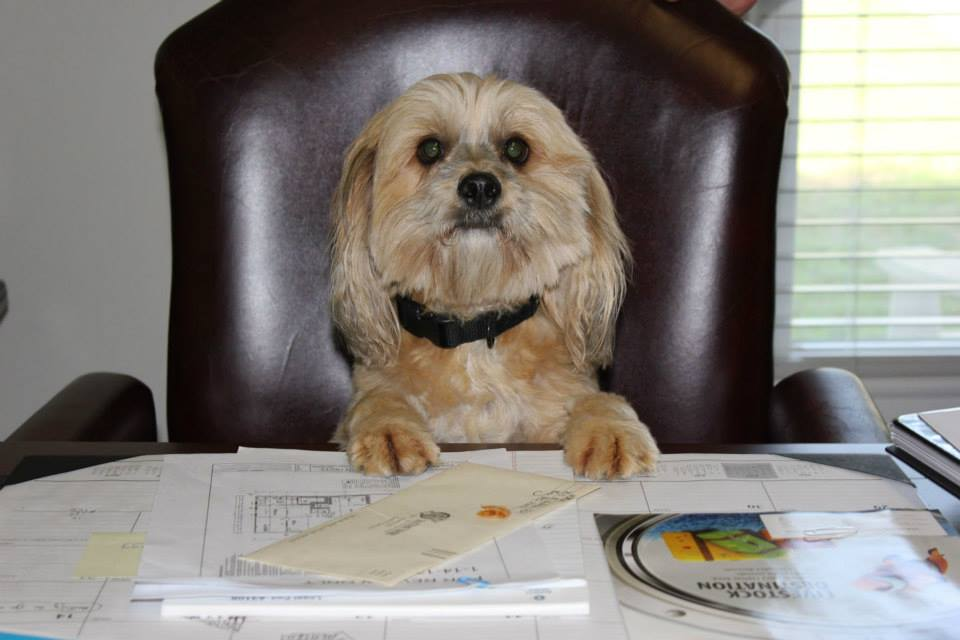 Take Your Dog to Work Day dog at desk