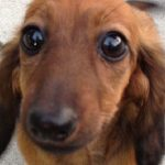 GRRR: Jury Finds PetSmart Groomer Not Guilty in 2016 Death of Dachshund