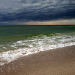 Dolphin-Watching Tour Captain Rescues Senior Dog Off Florida Coast