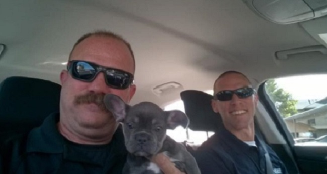 san bernardino cops rescue stolen puppy