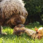 New Study Finds Raw Meat Diets May Not Be Safe for Dogs or People