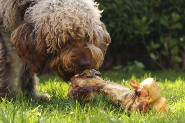raw food diets dangerous for pets and people