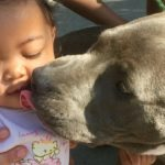 Young Hero Pit Bull Saves Baby from House Fire