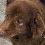 17-Year-Old Deaf Dog Rescued After Spending 4 Days in Ravine