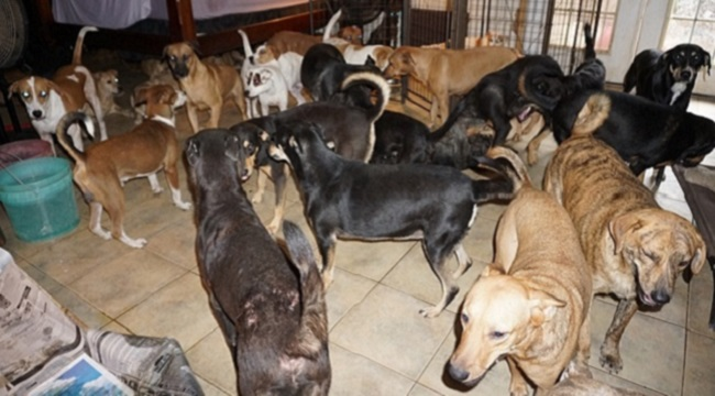 dogs rescued before hurricane dorian