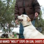 Yellow Lab Puppy Shoots Woman (She's Okay)