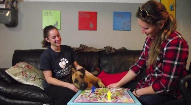 real-life rooms help shelter dogs get adopted