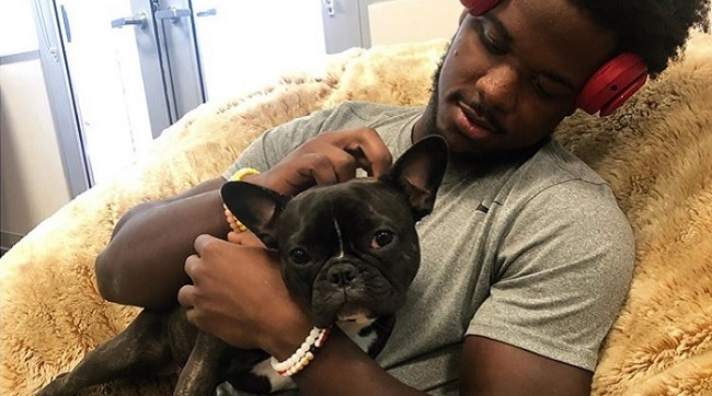 Zoe, San Francisco 49ers emotional support dog