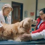 Grateful Dog Dad Buys Super Bowl Ad Praising UW Veterinary School