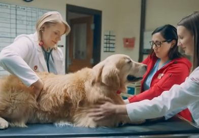 Scout and UW Veterinary School in Super Bowl commercial